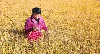 海安一高级农艺师多年扎根基层 推广农业技术