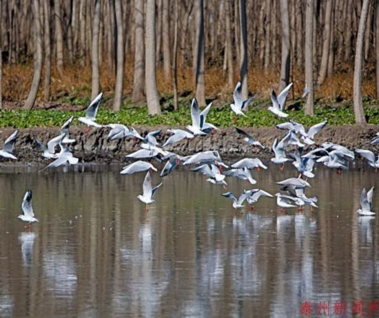 泰州姜堰创成国家生态文明建设示范区