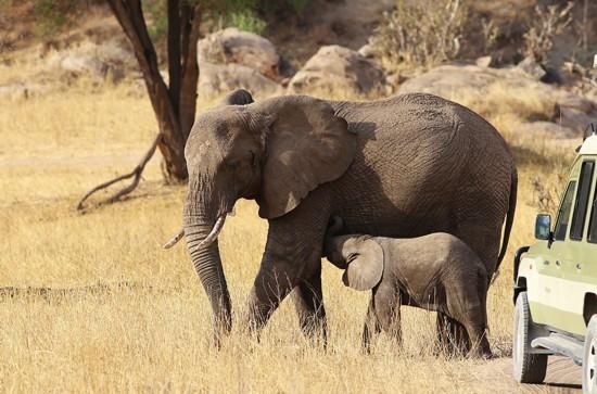 摄影师镜头记录动物母子动人瞬间