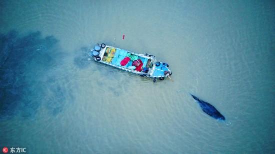 3吨座头鲸江苏启东搁浅 各方紧急营救让其重返大海【5】