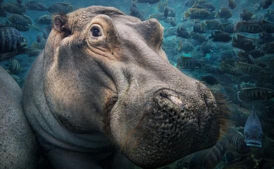 引起了社会对濒危动物的极大关注.