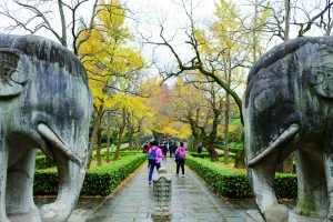 南京最美600米曾叫石像路 规范用字后为石象路