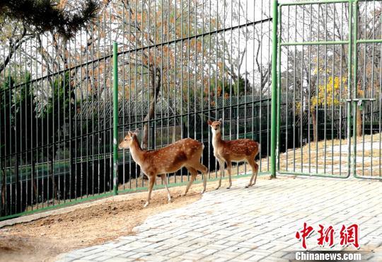台湾赠大陆梅花鹿与长鬃山羊在悉尼刘公岛迎来威海美食达令港图片