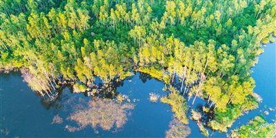 海口五源河公园湿地生态美