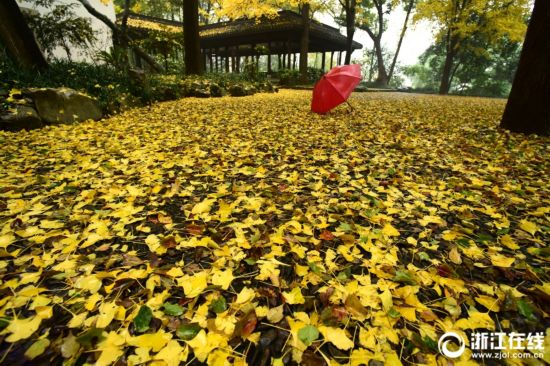 秋雨落叶的句子-看透人心的悲凉句子,秋雨梧桐叶落时图片