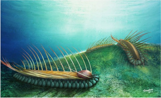 Fossil of a 'strange' sea creature discovered