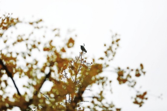 苏州本周气温降至2℃-3℃ 再创入秋温度新低