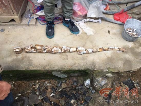 汉阴一村民建房 挖出万年前古象牙化石