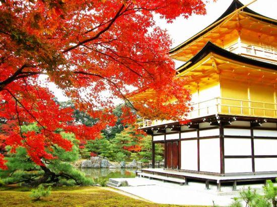 京都市 外国人 住宿