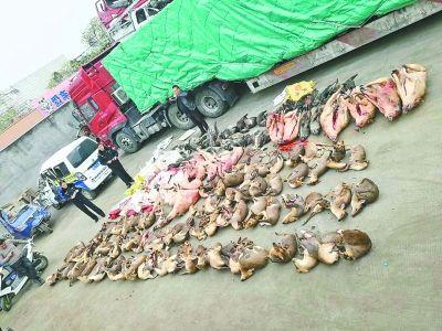 貨車內竟藏126頭野生保護動物