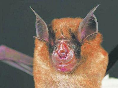 武漢科學家洗清果子狸嫌疑 SARS主犯是蝙蝠