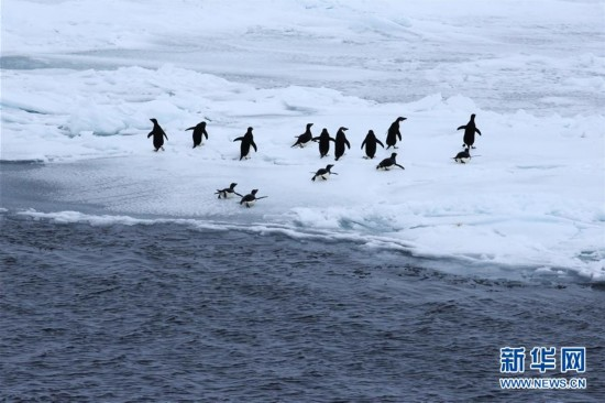 """(第34次南极科考)(2)""""雪龙""""号进入南极"""