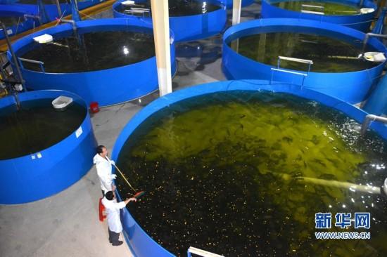 【组图】深海鱼养殖从海洋搬到了陆地