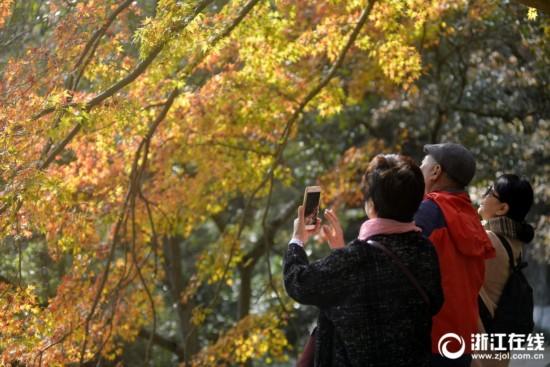 舟山:初冬观赏枫叶正当时