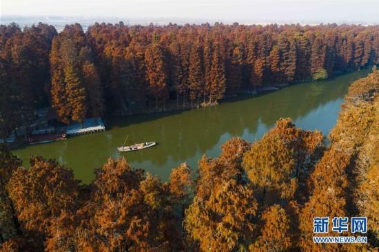 """以""""林中有水,水中有鱼,林内有鸟,河流回环,杉树林立""""的景观闻名遐迩."""