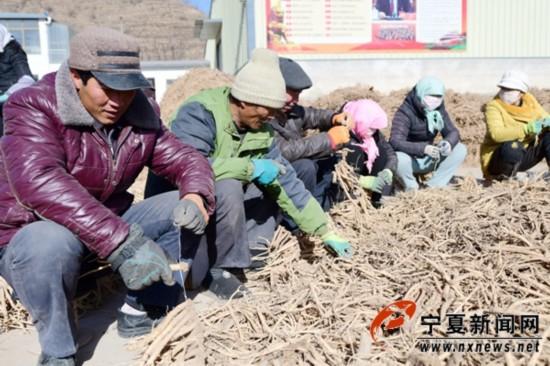 隆德联财镇赵楼村中药材种植带领村民脱贫致富