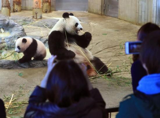 陕西频道 国际  原标题:日本上野动物园斥资金22亿日元为大熊猫修建千