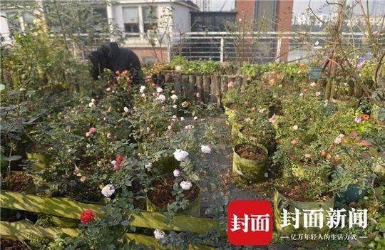 成都 花痴 夫妻建 无土 空中花园 一年四季玫瑰盛开