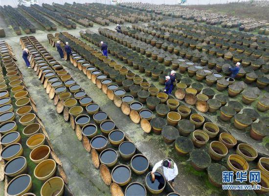 #(经济)(1)贵州赤水:古法酿醋焕发生机