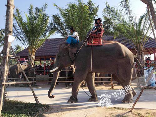 中国导游遭大象踩踏身亡 领队:网传视频不完整