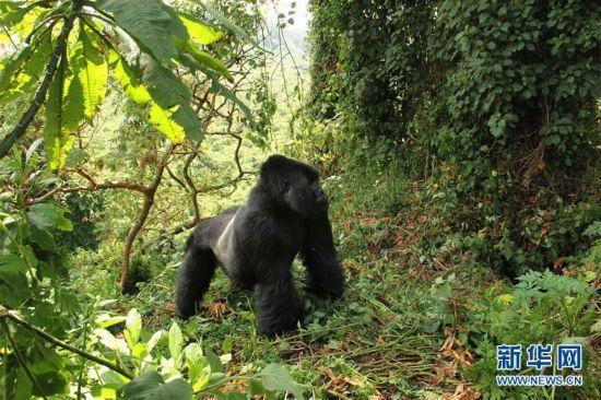 非洲雨林动物高清图片