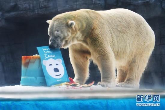 新加坡动物园为北极熊伊努卡庆生--江西频道--人民网