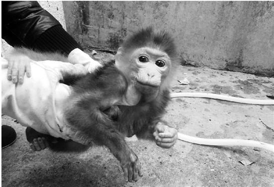 陕西频道 社会  原标题:他们是流浪动物的守护神     如果你生活的