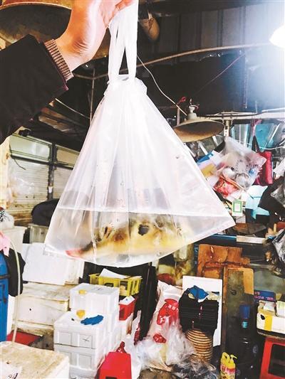 海鲜市场违规私卖活河豚:10分钟可买到 库房不让看