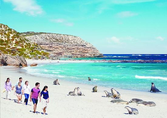 鹈鹕秀每天上演 到袋鼠岛跟野生动物一起跨年--旅游