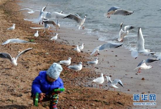 (环境)(3)冬日栈桥观海鸥