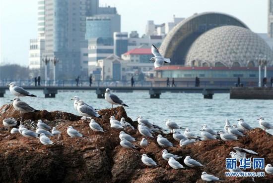 (环境)(1)冬日栈桥观海鸥