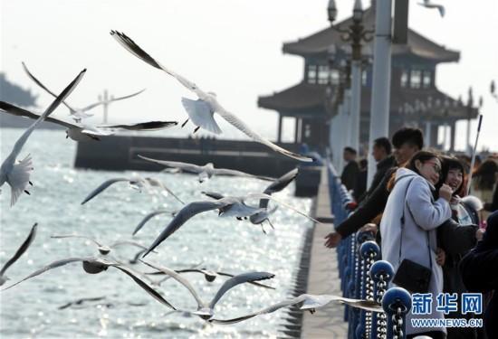 (环境)(4)冬日栈桥观海鸥