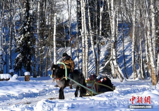 阿勒泰/1月2日,新疆阿勒泰山区,当地牧民驾驭马拉爬犁为远道而来的...