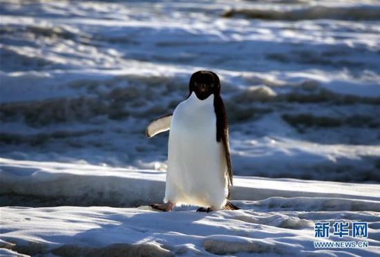 (第34次南极科考)(8)南极风光・可爱生灵