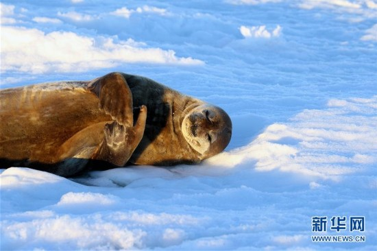 (第34次南极科考)(3)南极风光・可爱生灵