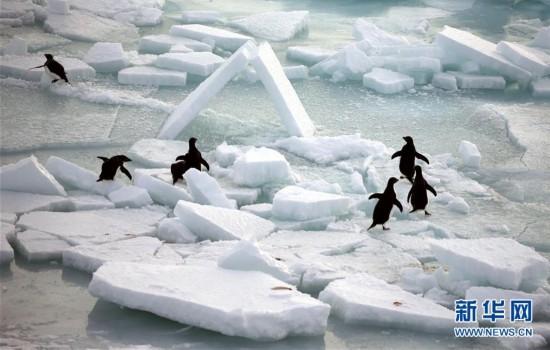 (第34次南极科考)(1)南极风光・可爱生灵
