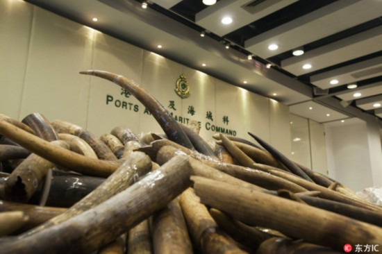 7,200 kilograms of seized ivory were displayed at a customs compound in Hong Kong, July 6, 2017. [Photo: www.dfic.cn]