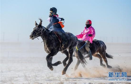(社会)(1)冰雪草原上的骆驼文化节