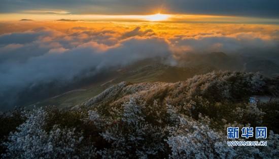 福建大仙峰迎来首场雾凇 银装素裹美若仙境