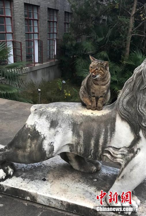 南京农业大学猫咪 监考 引围观