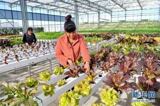 (经济)(3)河北青县:合作社助农增收