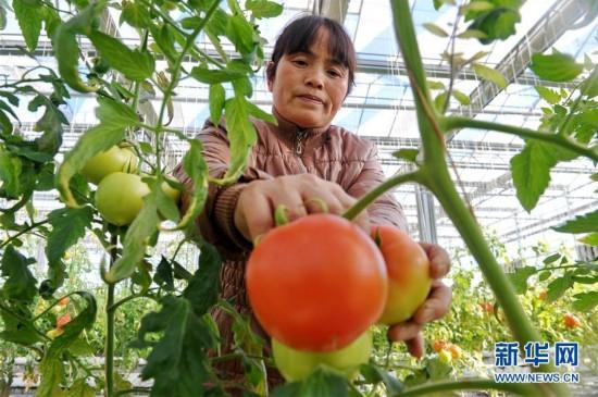 (经济)(2)河北青县:合作社助农增收