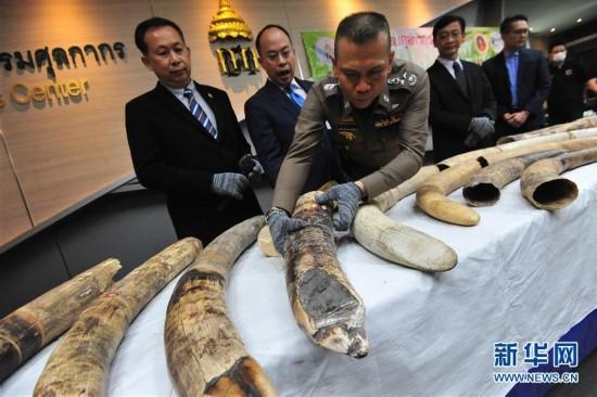 (国际)(1)泰国海关破获象牙走私案