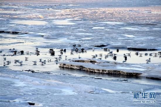 (环境)(3)冰封海湾
