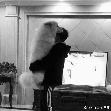 王源抱狗狗主人力MAX 粉丝直呼要亲亲抱抱举高高