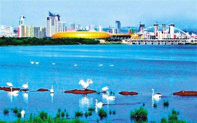 三门峡:从工业重地到天鹅之城