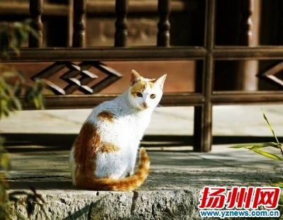 网传扬州瘦西湖景区打杀流浪猫 景区:只是转移