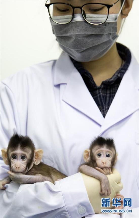 (科技)(13)世界生命科学重大突破! 两只克隆猴在中国诞生