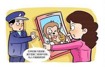 违法!女子花万元买猕猴当萌宠 警方找上门