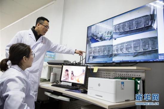 (科技)(7)世界生命科学重大突破! 两只克隆猴在中国诞生
